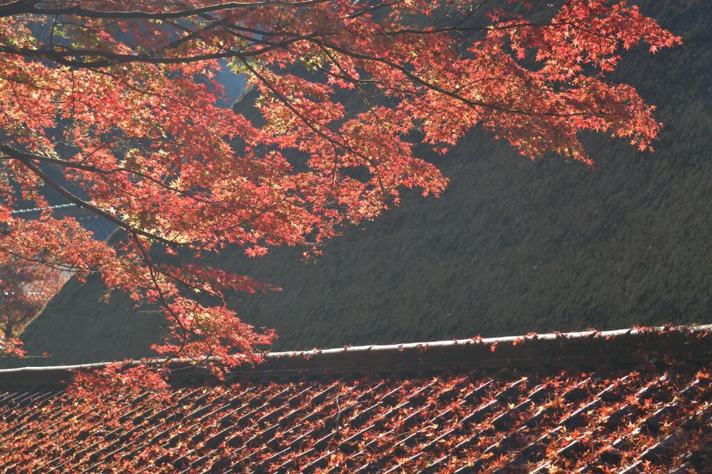 香嵐渓紅葉写真撮影
