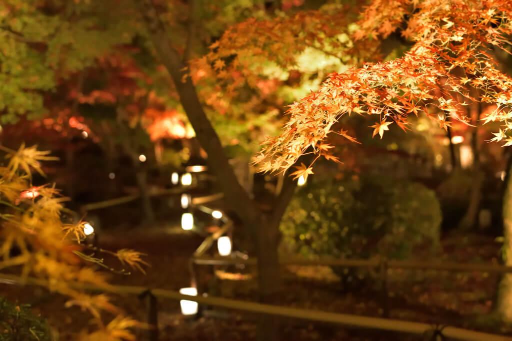 永観堂紅葉ライトアップ写真