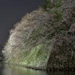 いろは松の夜桜写真