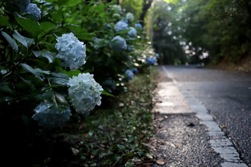 Miyoshi-lake-run