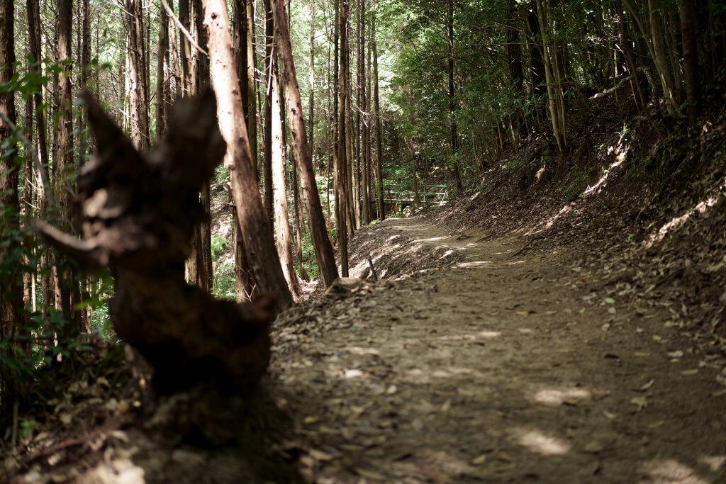 RUN猿投山トレイル